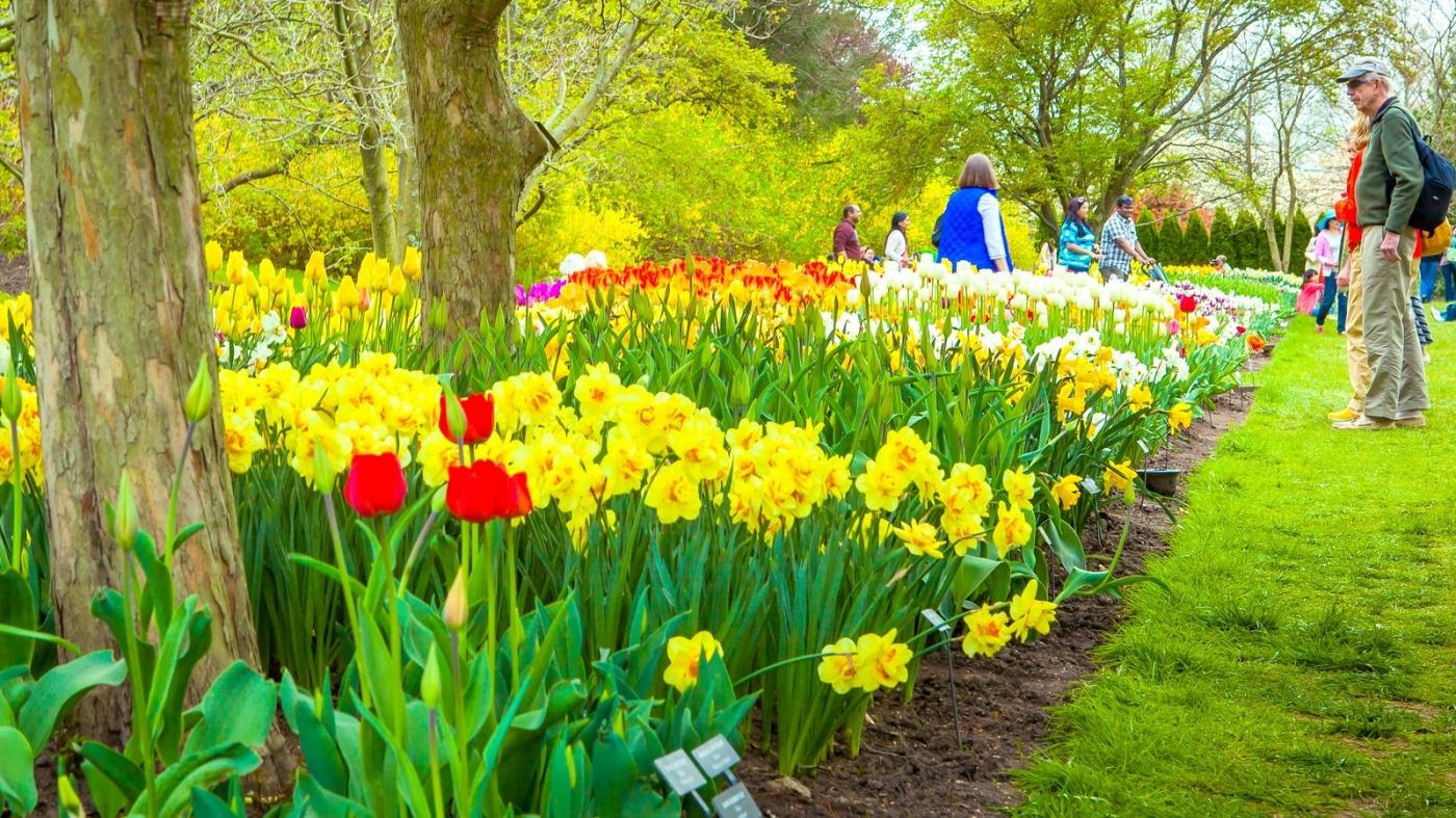 长木公园,赏花的心情_图1-9