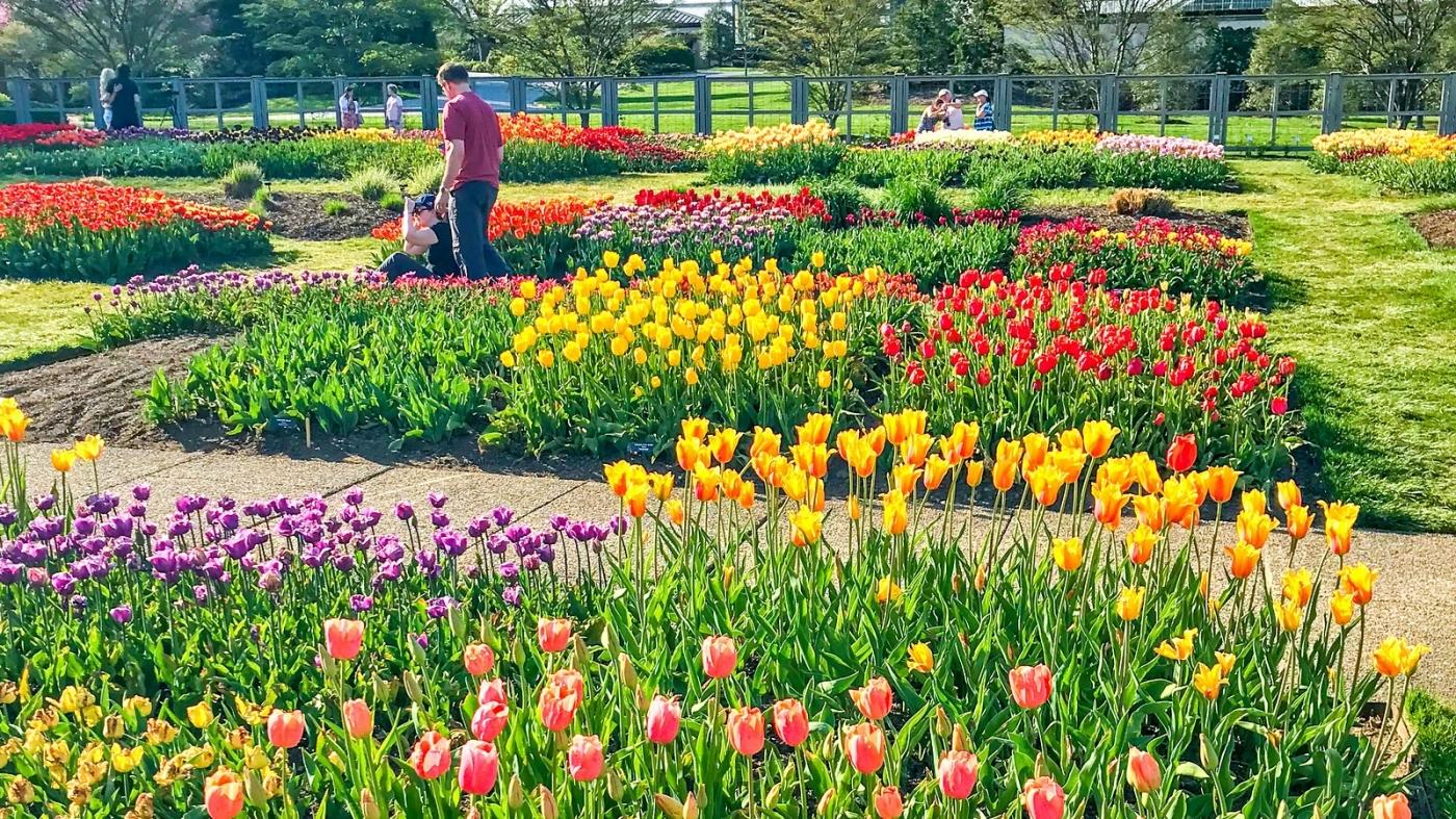长木公园,赏花的心情_图1-8
