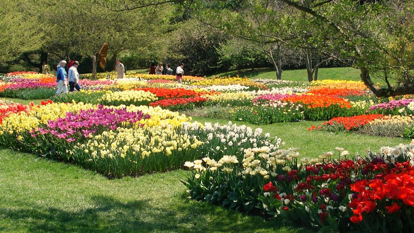 长木公园,赏花的心情_图1-7