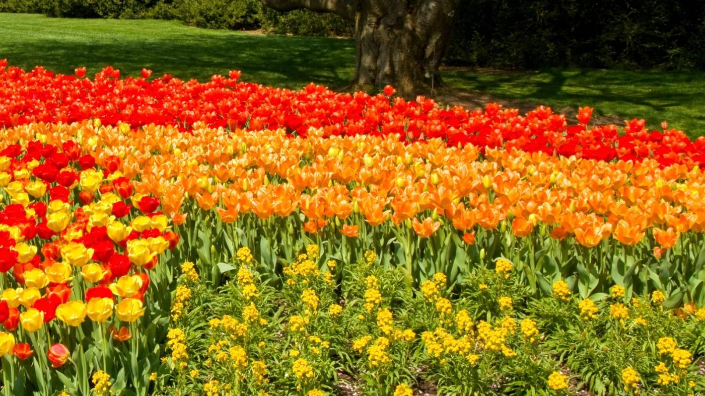 长木公园,赏花的心情_图1-5