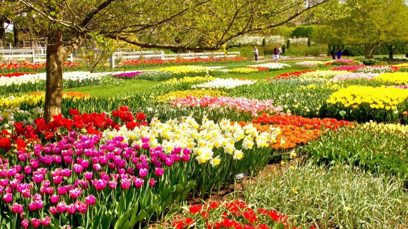 长木公园,赏花的心情_图1-1
