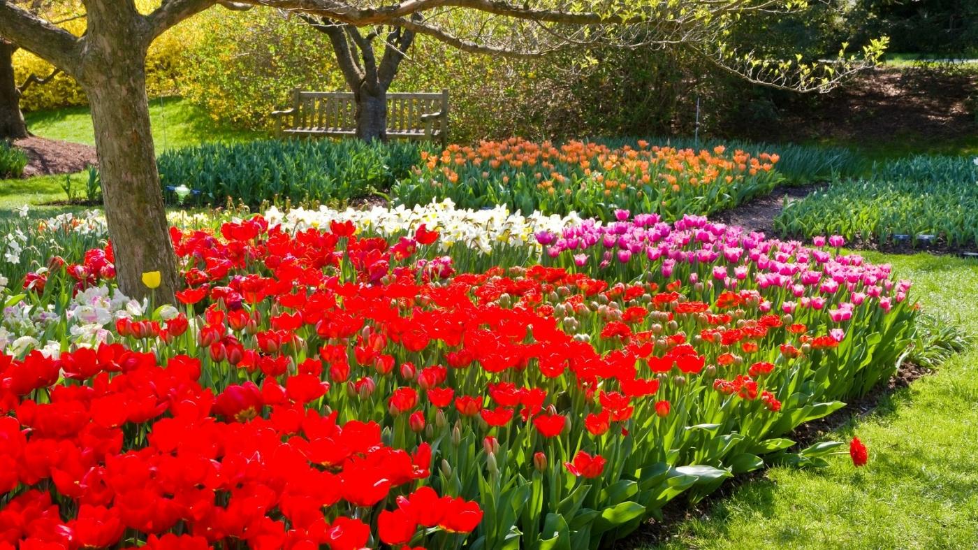 长木公园,赏花的心情_图1-2