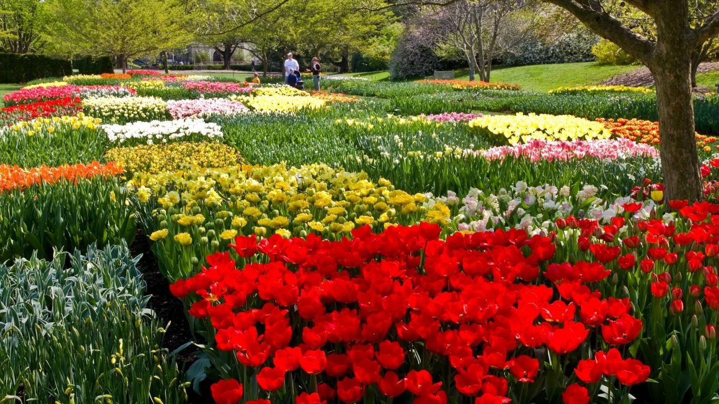 长木公园,赏花的心情_图1-3