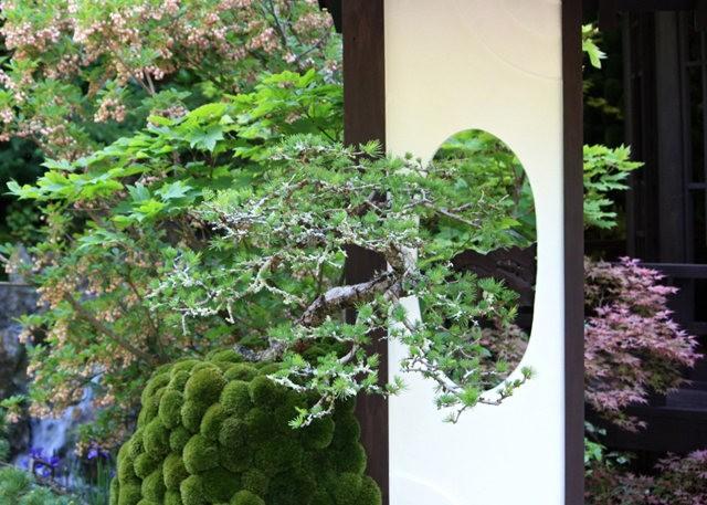 Sarills Garden & 日本庭园_图1-25