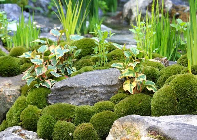Sarills Garden & 日本庭园_图1-29
