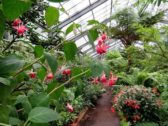 科隆植物园之温室植物_图1-1