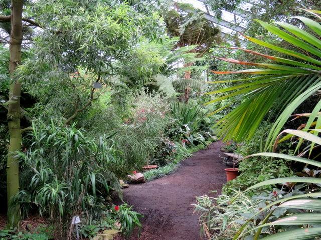 科隆植物园之温室植物_图1-2