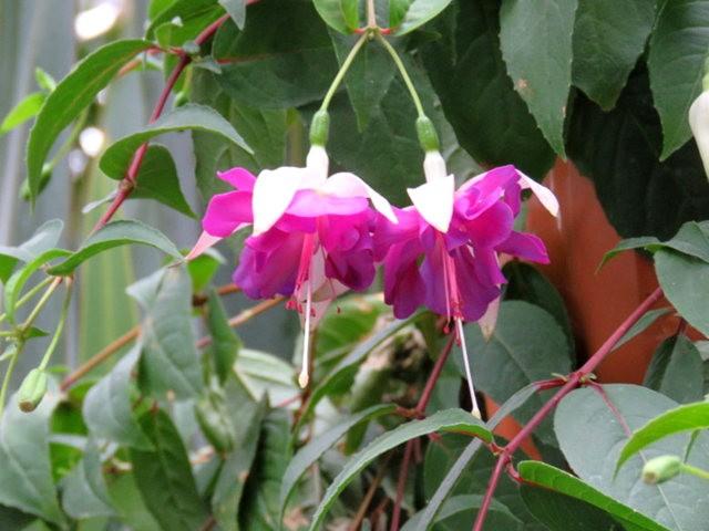科隆植物园之温室植物_图1-9