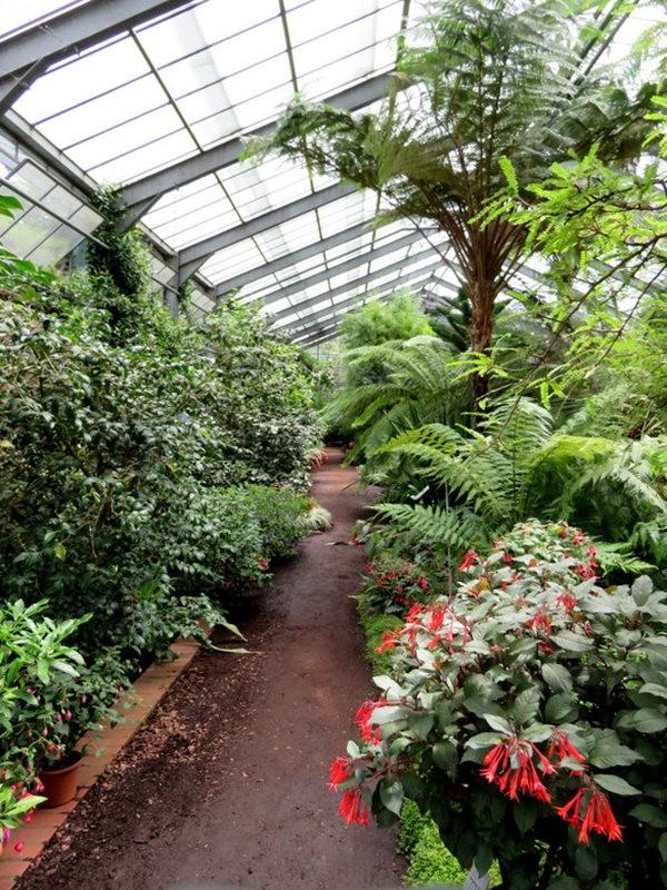 科隆植物园之温室植物_图1-11