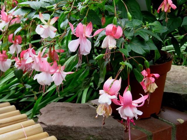 科隆植物园之温室植物_图1-14