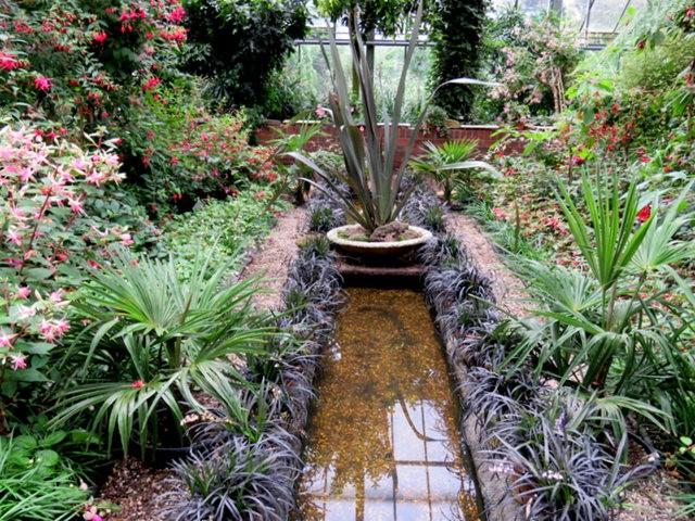 科隆植物园之温室植物_图1-15