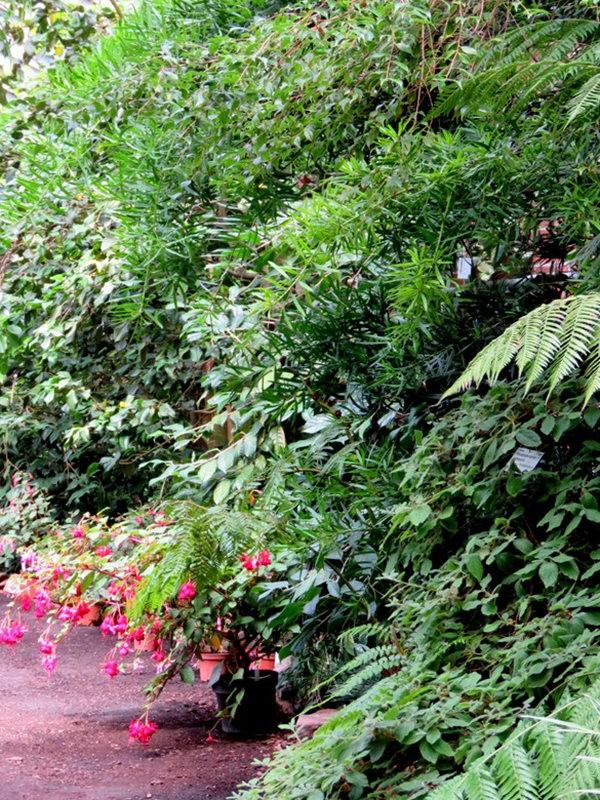 科隆植物园之温室植物_图1-17