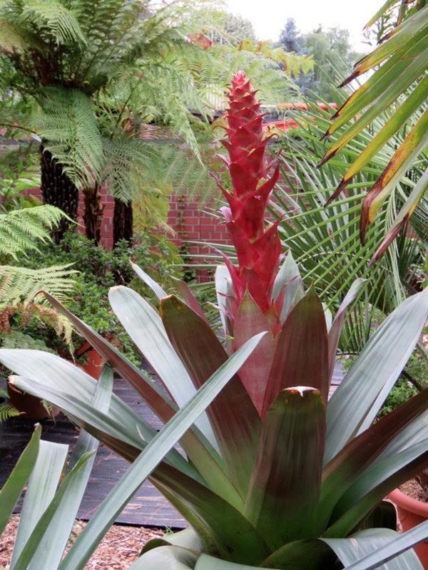 科隆植物园之温室植物_图1-22