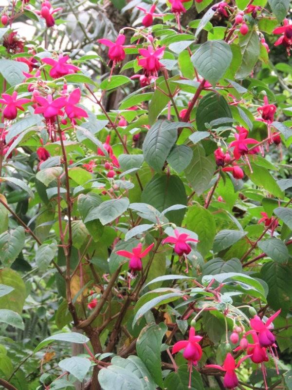 科隆植物园之温室植物_图1-23