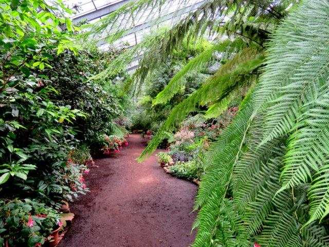 科隆植物园之温室植物_图1-24