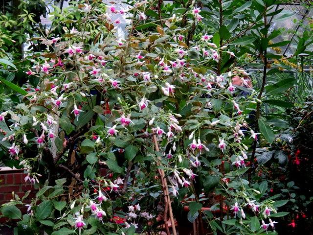 科隆植物园之温室植物_图1-25