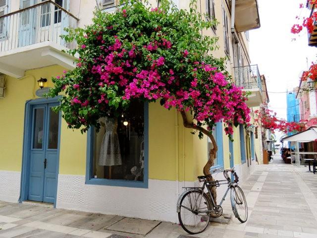纳天普利--沐浴在花的城镇(希腊)_图1-1