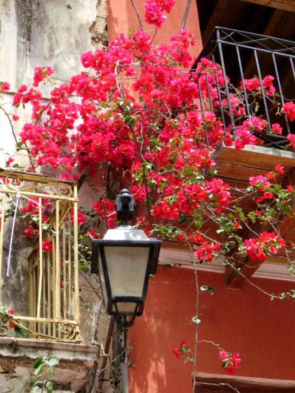 纳天普利--沐浴在花的城镇(希腊)_图1-5