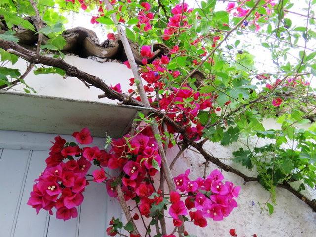 纳天普利--沐浴在花的城镇(希腊)_图1-21