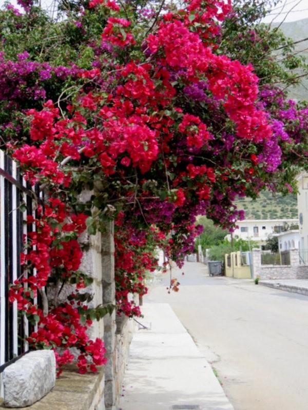 阿雷奥波利--石造的小镇(希腊)_图1-10