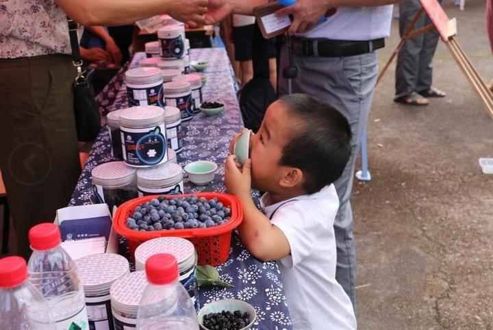 蓝莓盛宴_图1-6