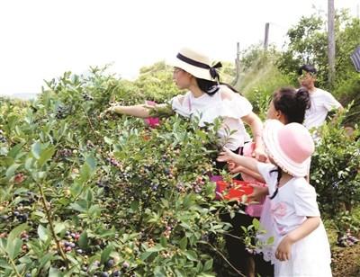 蓝莓盛宴_图1-11