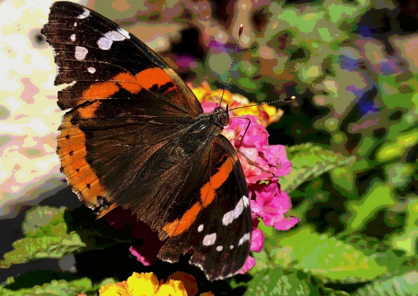 【田螺随拍】我种了马鞭草蝴蝶就来了_图1-12
