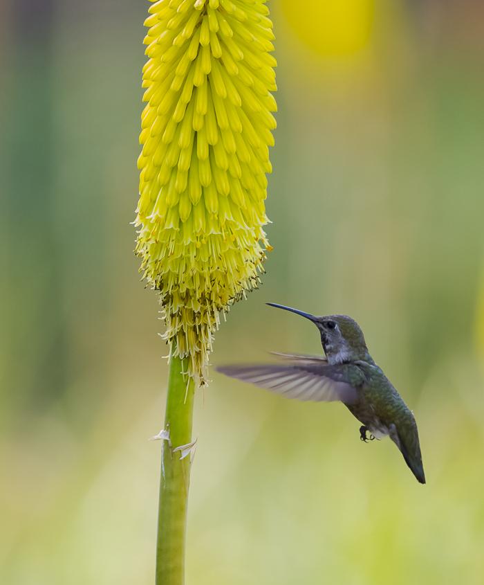 蜂鸟_图1-18
