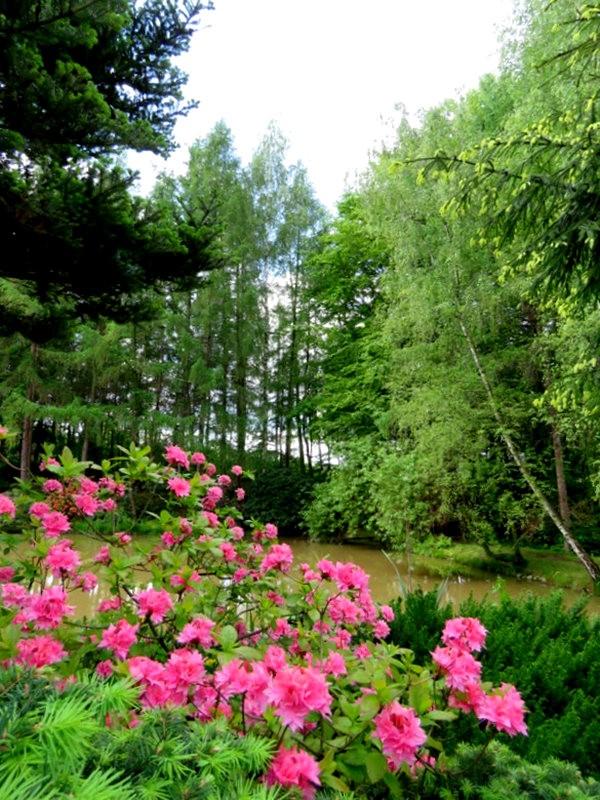 别尔斯克比亚瓦公园-----杜鹃园_图1-13