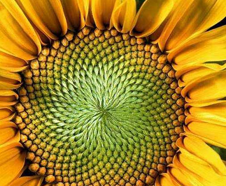 向日葵2_图1-10