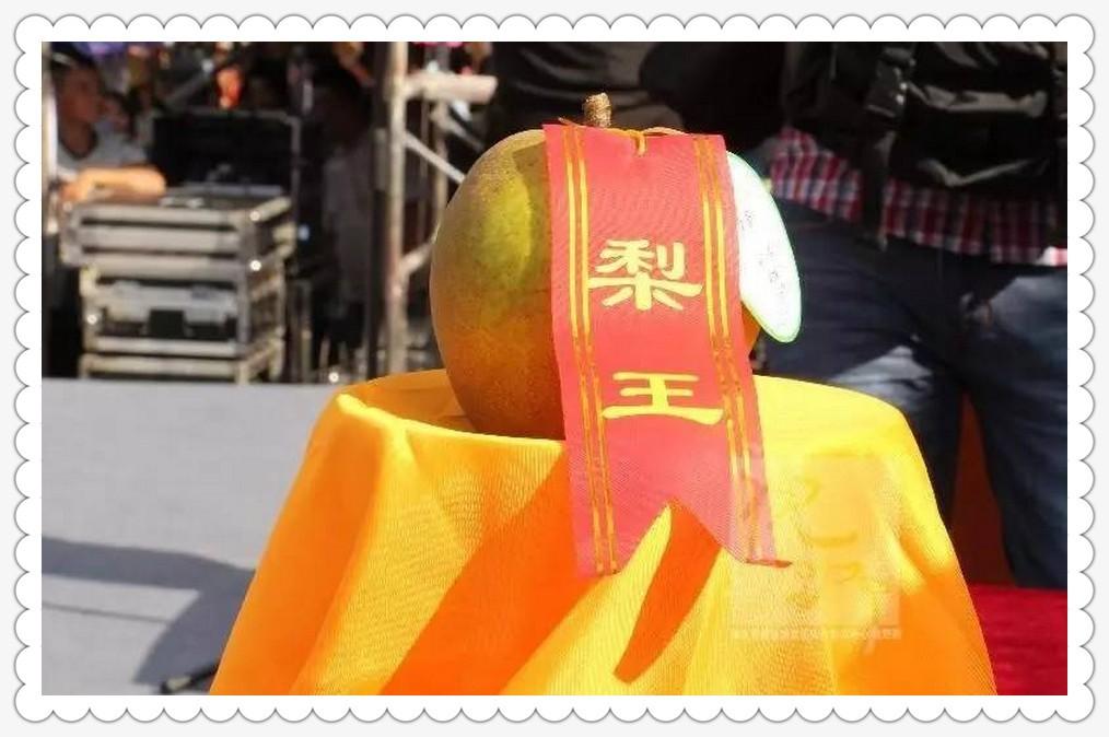桐琴蜜梨节_图1-4