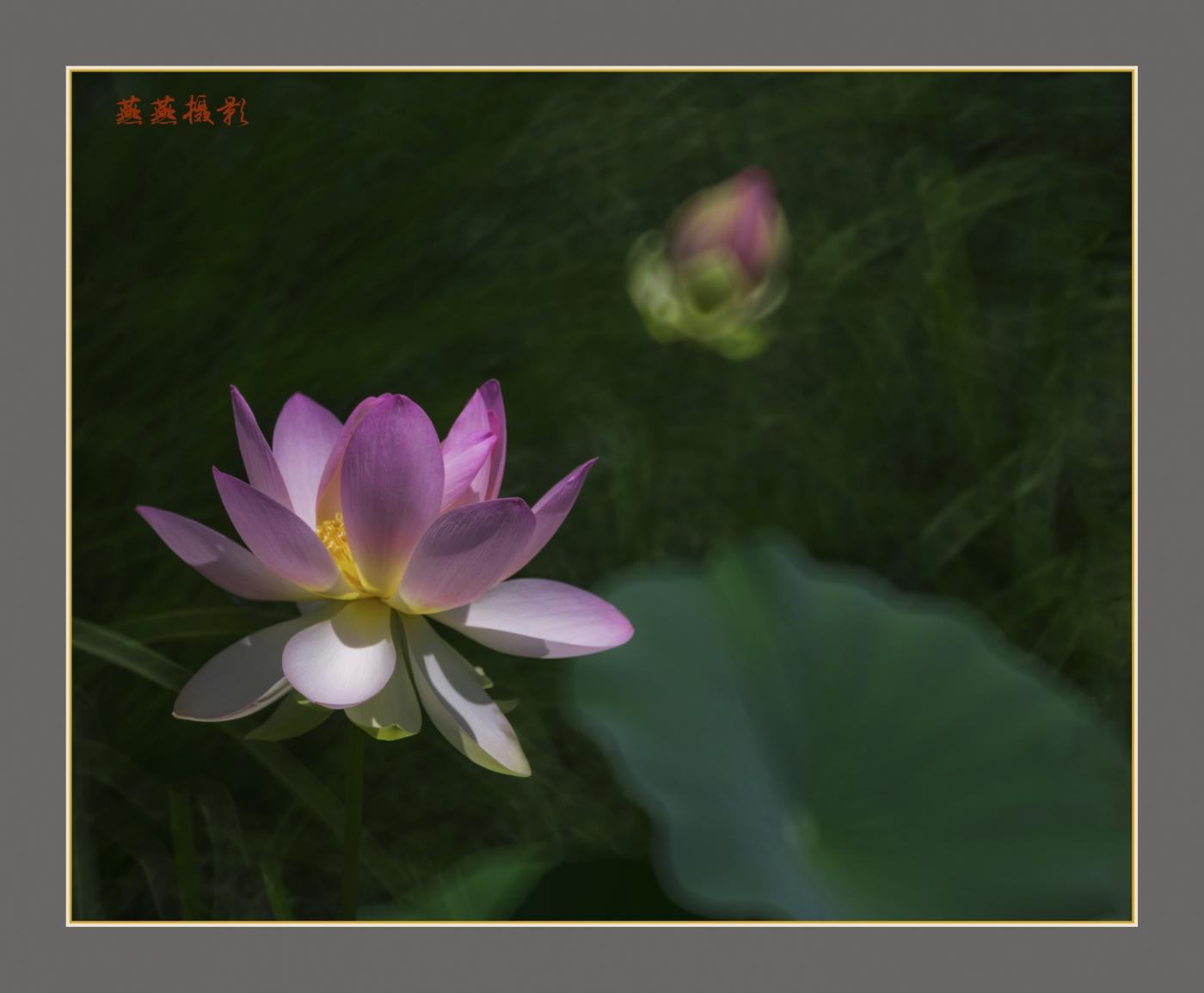 荷香_图1-1