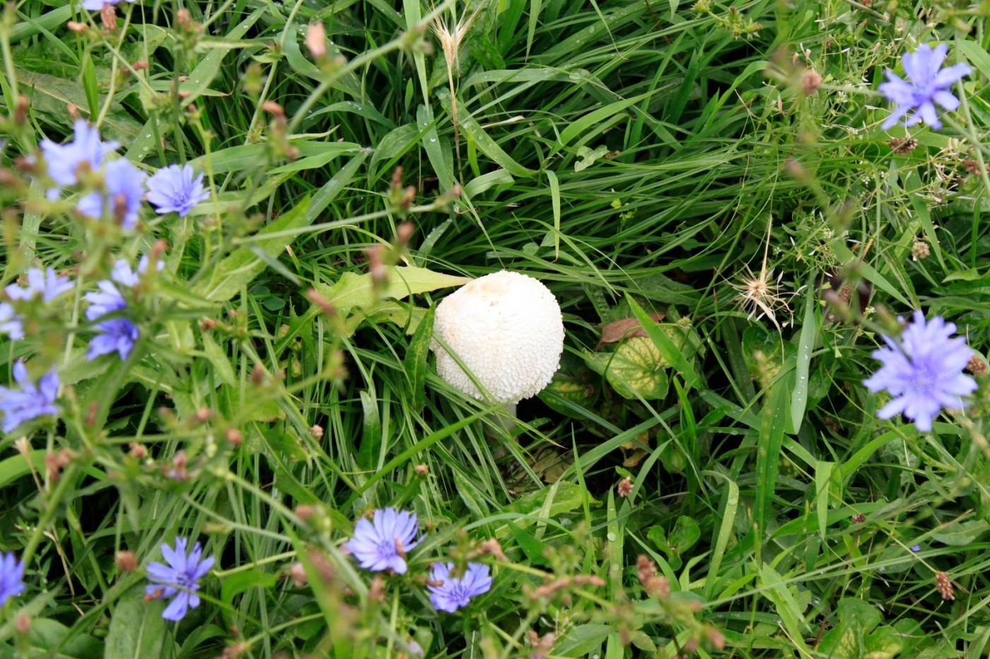 几场大雨后,法拉盛市政厅前的公园内长出了很大的野蘑菇! ..._图1-6
