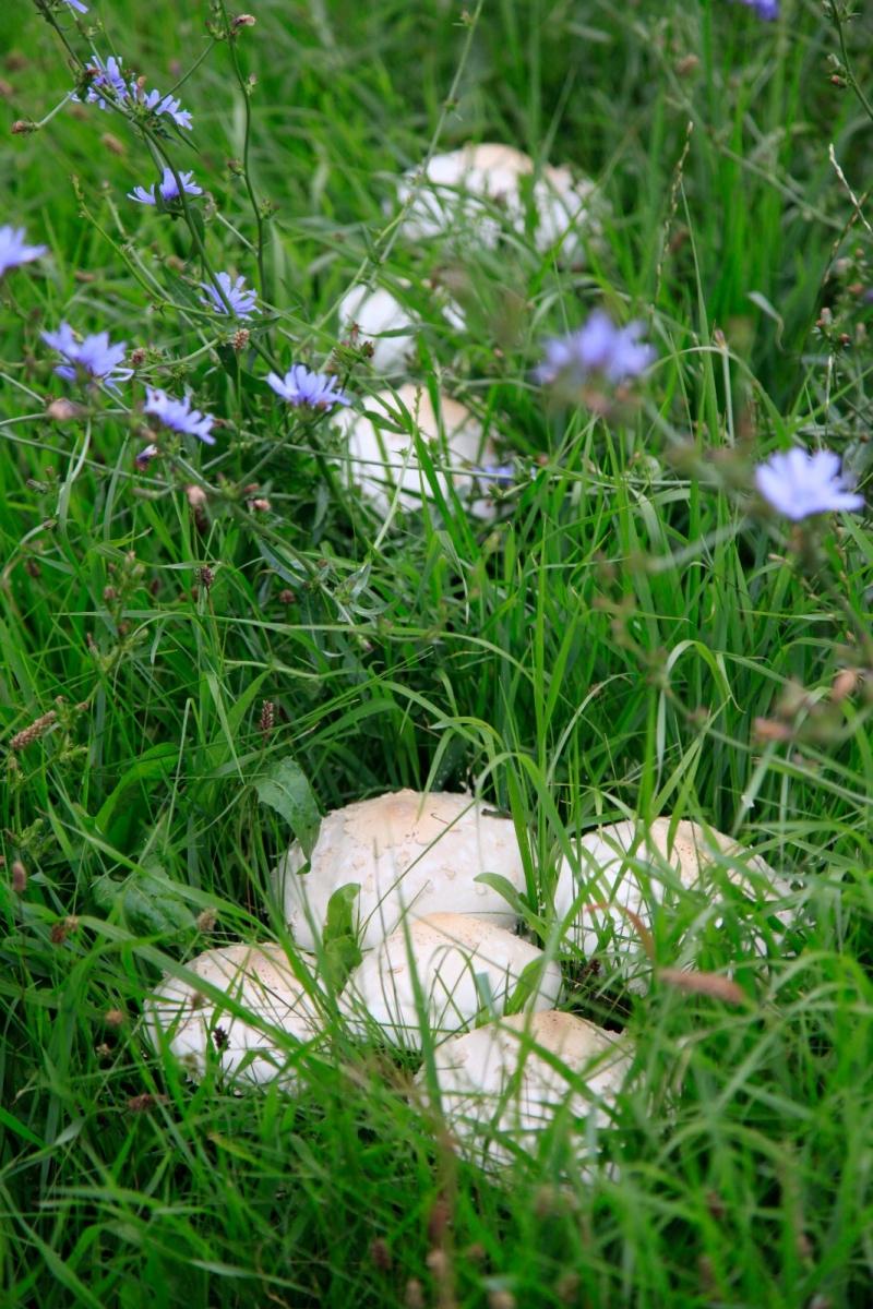 几场大雨后,法拉盛市政厅前的公园内长出了很大的野蘑菇! ..._图1-1