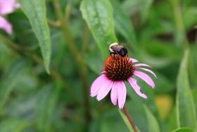 蜜蜂爱花,依依不舍!
