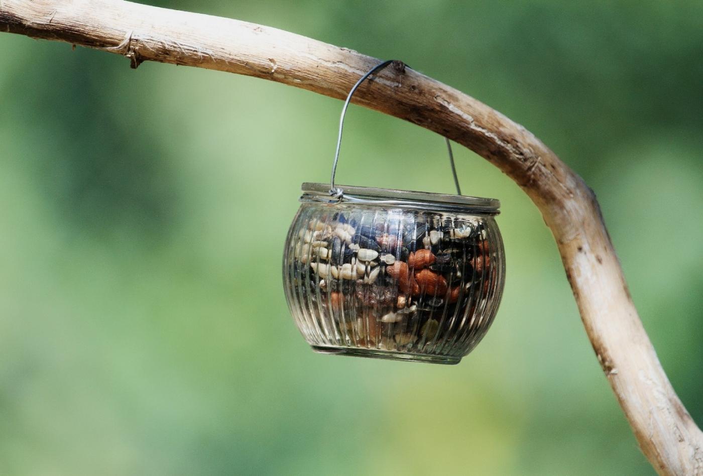【田螺摄影】做个漂亮的喂鸟器更吸引红衣主教_图1-16