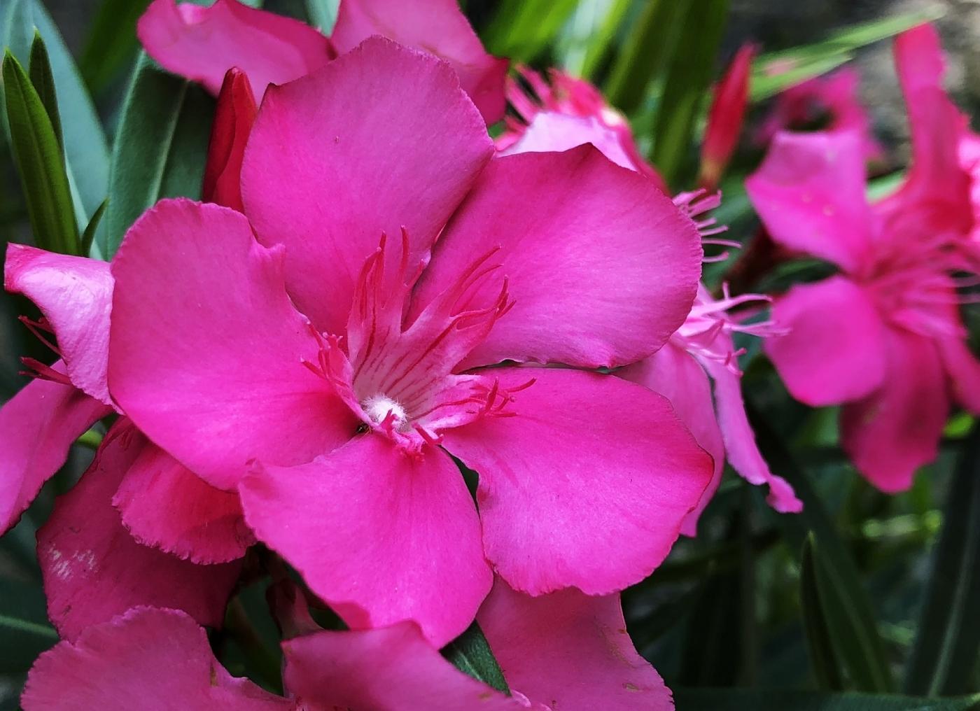 【田螺随拍】我今年种的蜂鸟喜欢吃的花都开了_图1-1