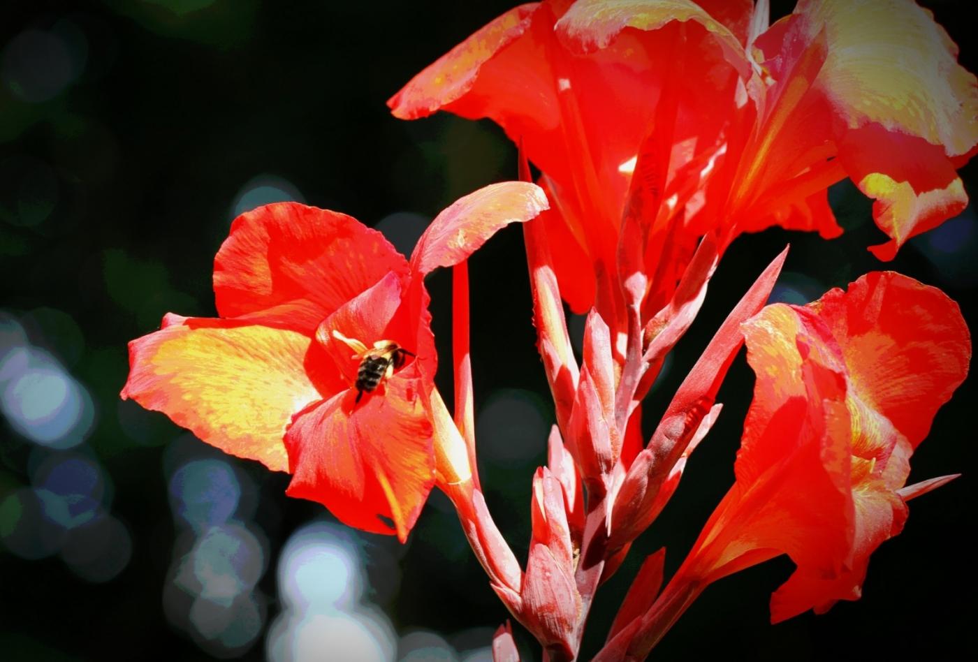 【田螺随拍】我今年种的蜂鸟喜欢吃的花都开了_图1-18