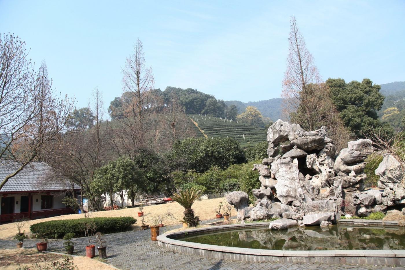 游杭州梅家坞茶场,品西湖龙井茶_图1-10