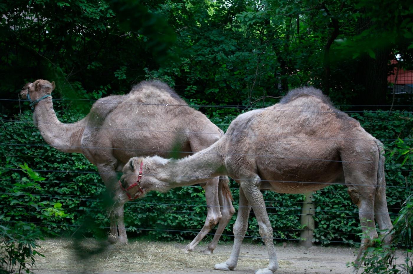 动物园花絮(摄于布朗士动物园,皇后区动物园)_图1-3