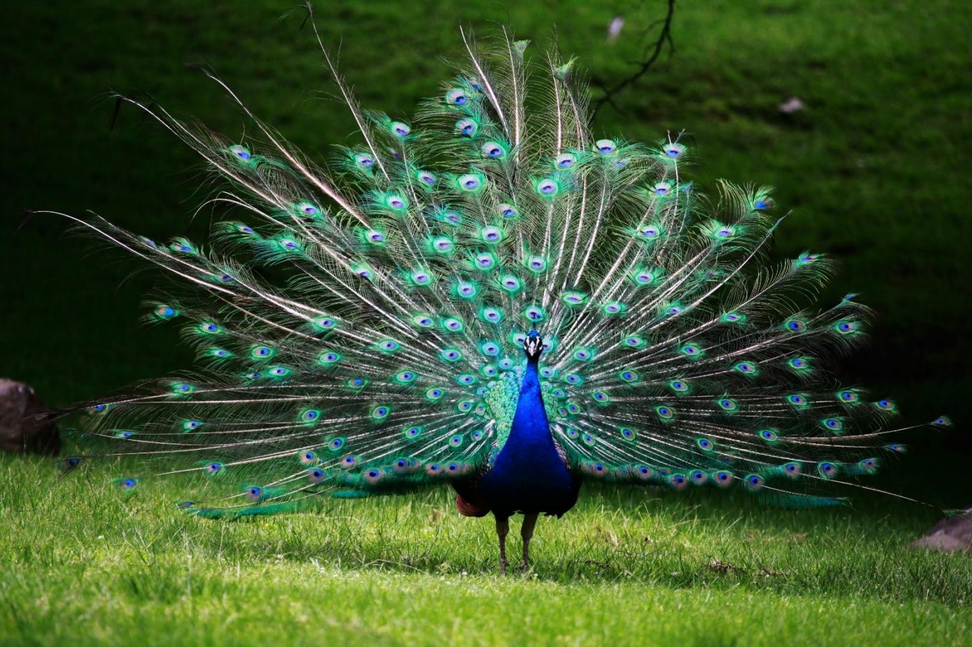 动物园花絮(摄于布朗士动物园,皇后区动物园)_图1-1