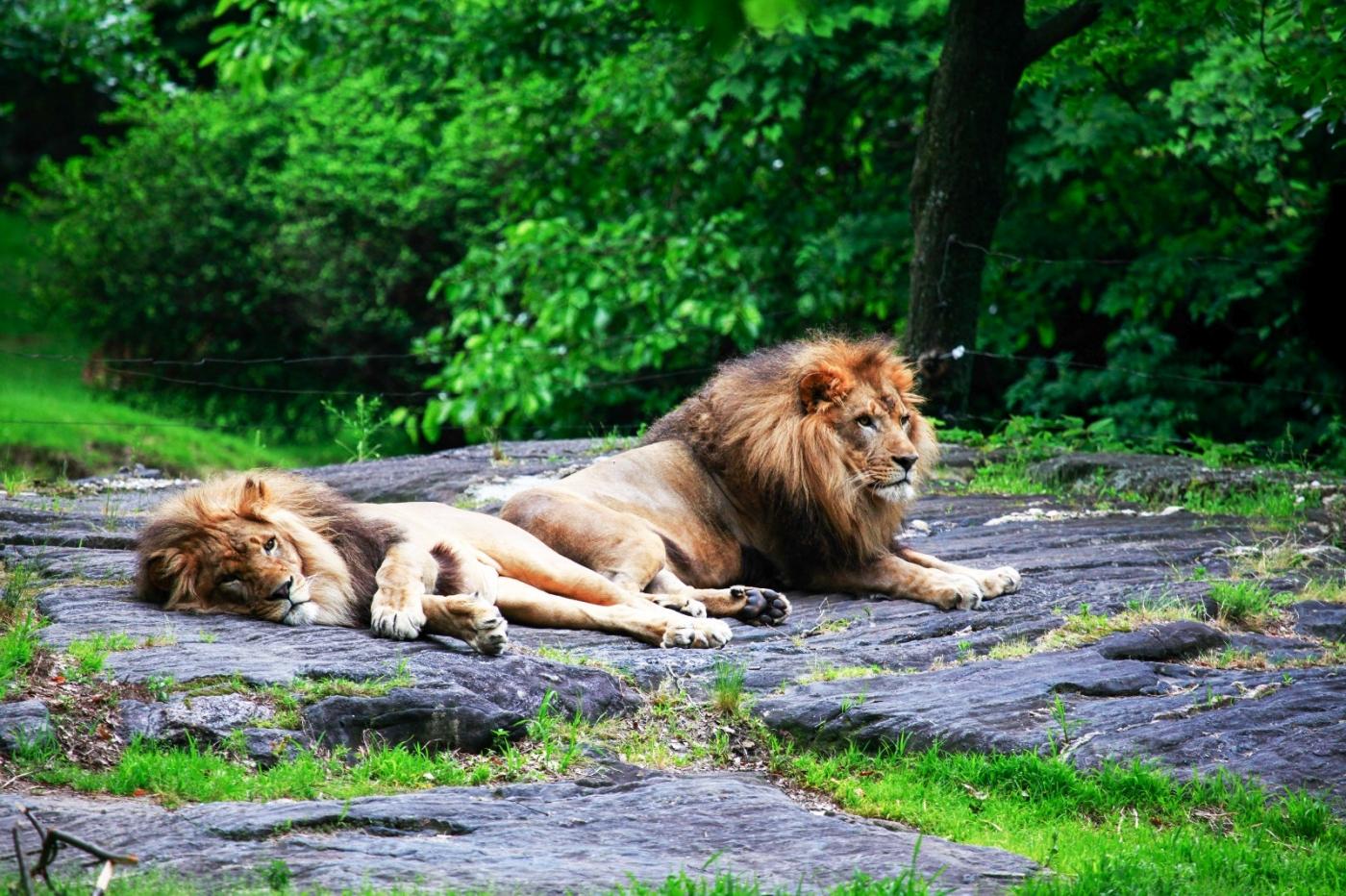 动物园花絮(摄于布朗士动物园,皇后区动物园)_图1-2