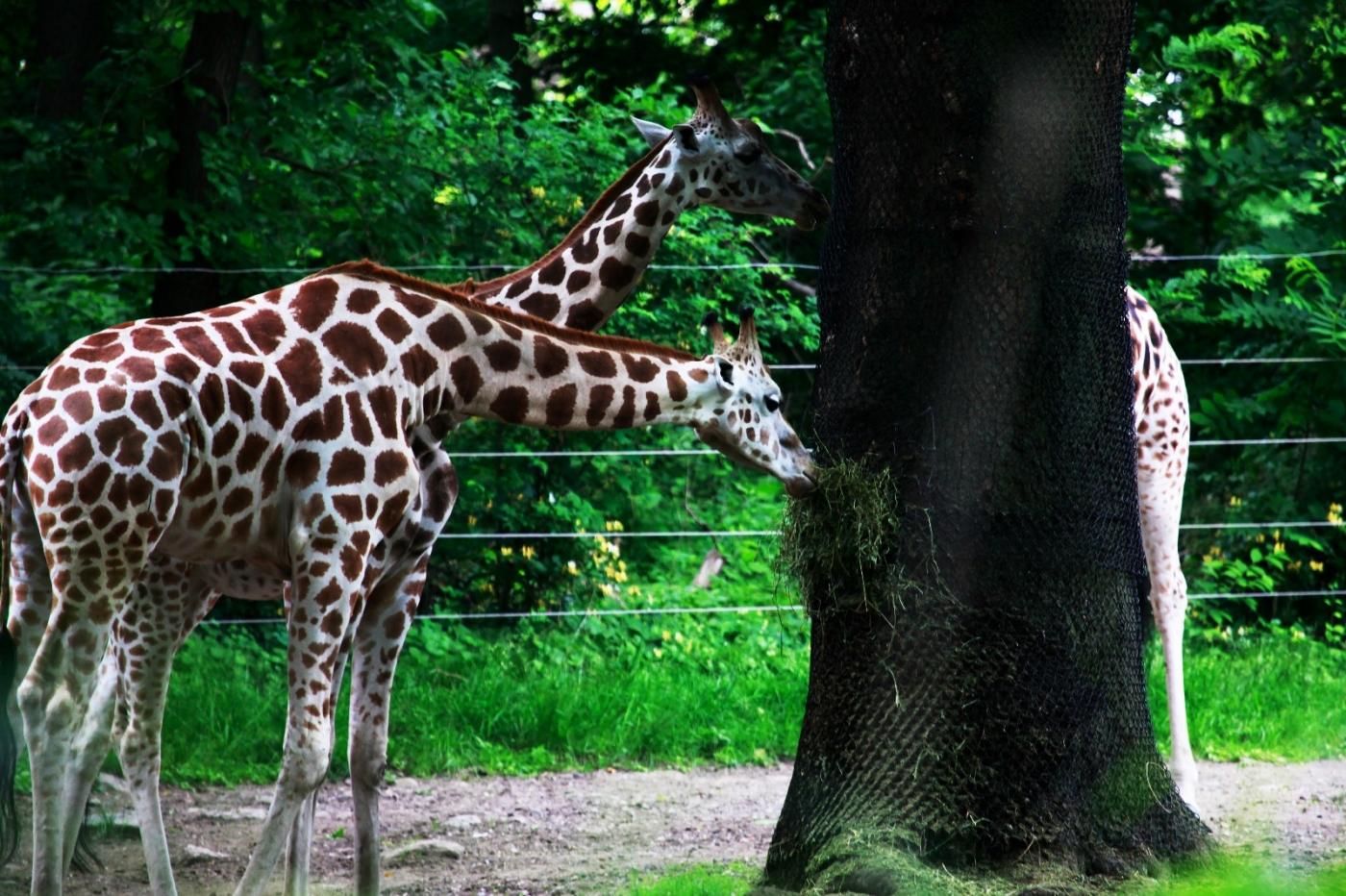 动物园花絮(摄于布朗士动物园,皇后区动物园)_图1-4