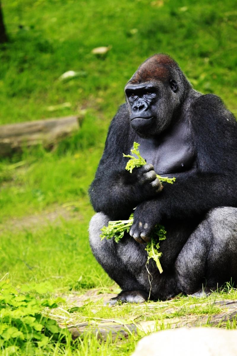 动物园花絮(摄于布朗士动物园,皇后区动物园)_图1-5