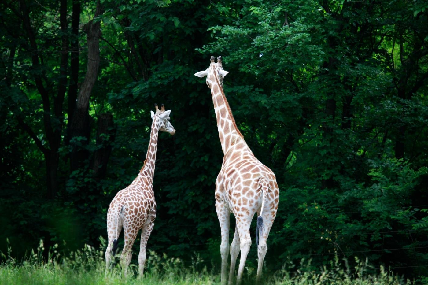 动物园花絮(摄于布朗士动物园,皇后区动物园)_图1-6
