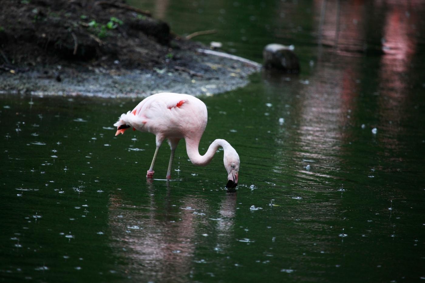 动物园花絮(摄于布朗士动物园,皇后区动物园)_图1-7
