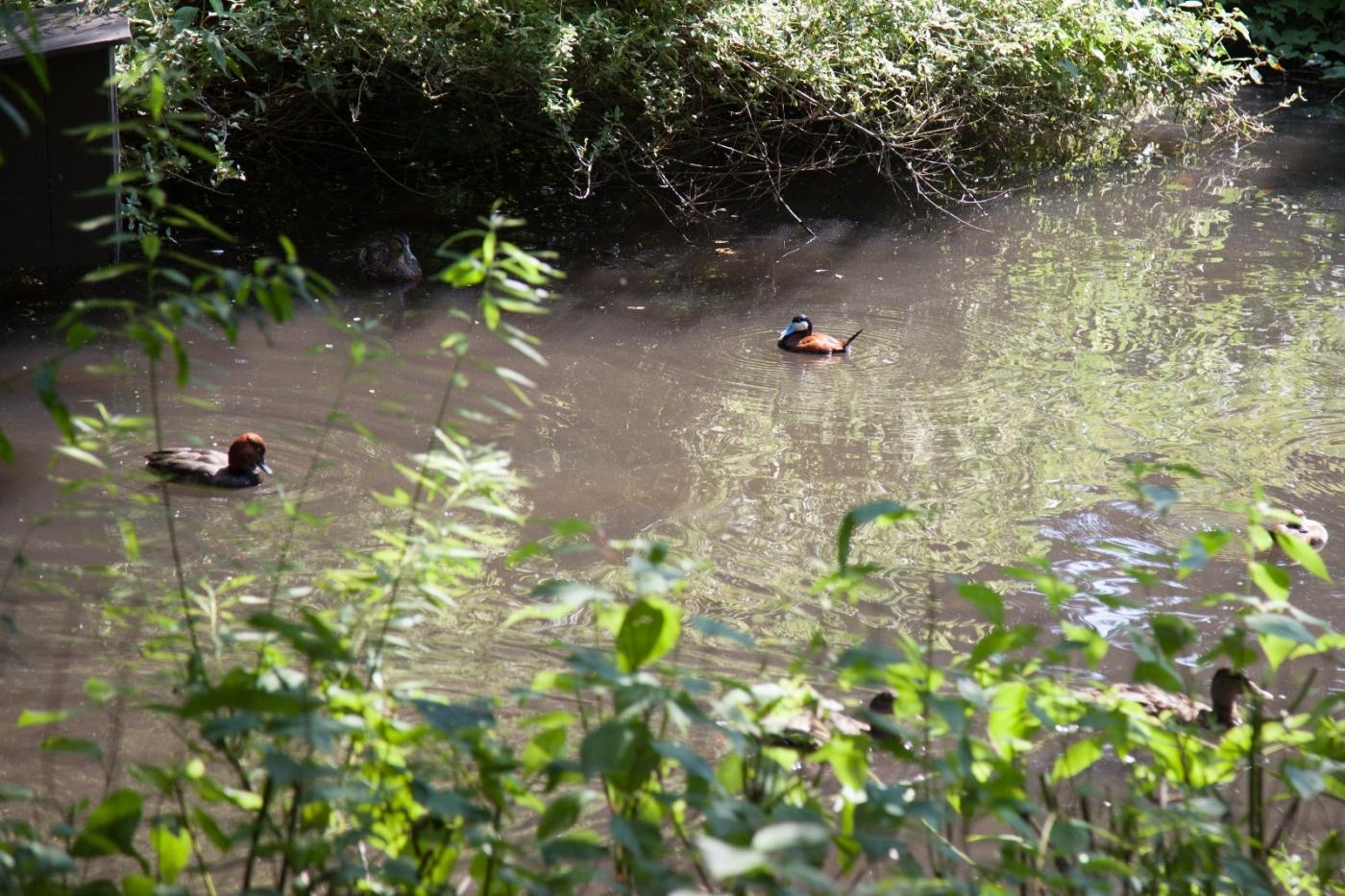 动物园花絮(摄于布朗士动物园,皇后区动物园)_图1-23
