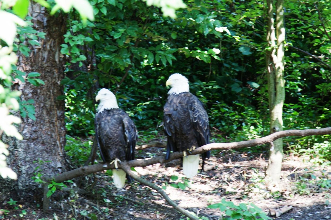 动物园花絮(摄于布朗士动物园,皇后区动物园)_图1-25