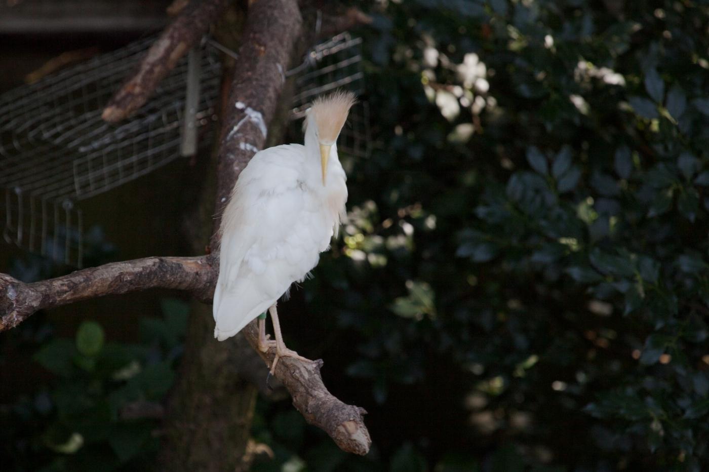 动物园花絮(摄于布朗士动物园,皇后区动物园)_图1-10