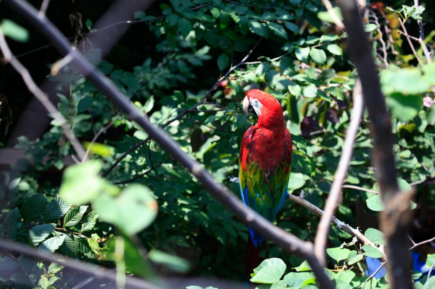 动物园花絮(摄于布朗士动物园,皇后区动物园)_图1-16
